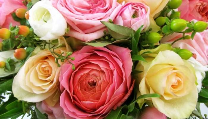 Ranuculus-Bunga-Cantik-yang-Beracun