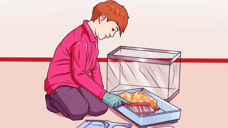Bersihkan Kandang Secara Teratur Cara Merawat Hamster Yang Masih Kecil