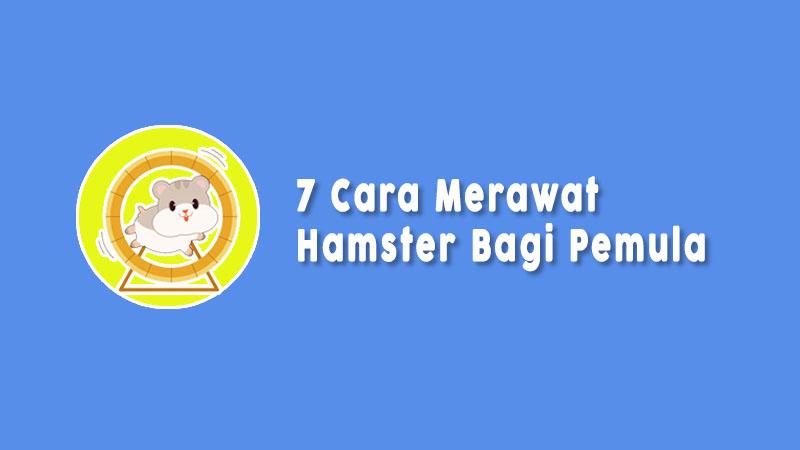 Cara Merawat Hamster Yang Harus Dipahami Pemula